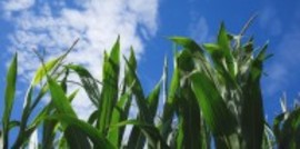 Corn congress