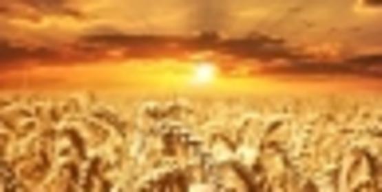 Soybean/Small Grains Congress