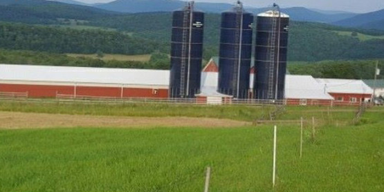 Moutainview dairy photo 1