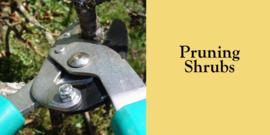 Pruning shrubs 01