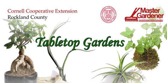 Tabeltop garden 01