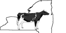 New York State Dairy