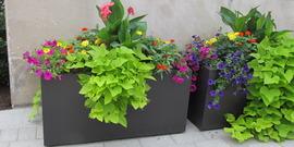 Commons planters