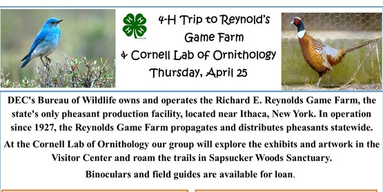 4-H Trip Reynolds Game Farm and Cornell Lab of Ornithology on April 25, 2019. Call 518-234-4303 x113 for more information