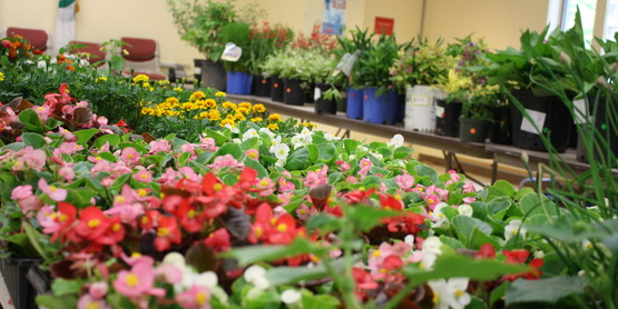 CCESC Annual Plant Sale 2015 Table