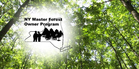 Master Forest Owner