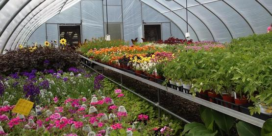 Greenhouse full of plants before the Dutchess County Master Gardener plant sale, 2014.