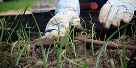 Gardening for Health and Well-Being