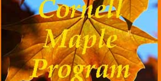 Graphic to use in sidebar for Cornell Maple Program
