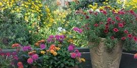 Orcutt garden