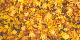 Stock fall leaves