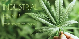 """cover of """"Industrial Hemp from Seed to Market"""""""