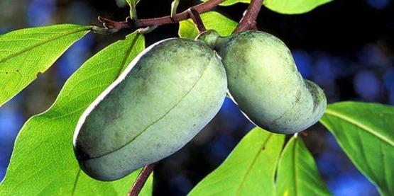 Growing Unusual Fruits