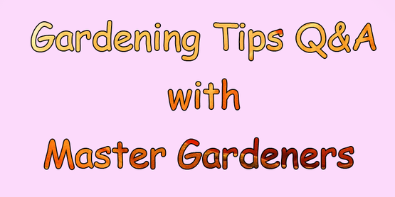 Gardening Tips Q&A with Master Gardeners