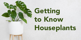 Getting to Know Houseplants event title
