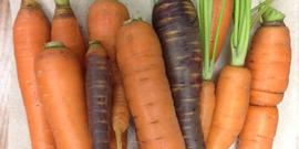 Root crops1
