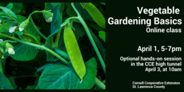 Graphic for online vegetable gardening class