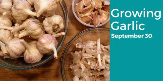 Garlic class online September 30, 2021 6-7:30pm