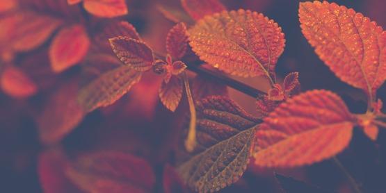 Close up of orange leaves.