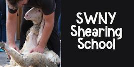 shearing school