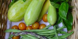 Beginning veg photo from mary