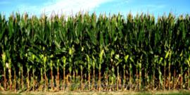 Corn Silage Harvest Workshop