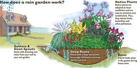 How rain garden works4