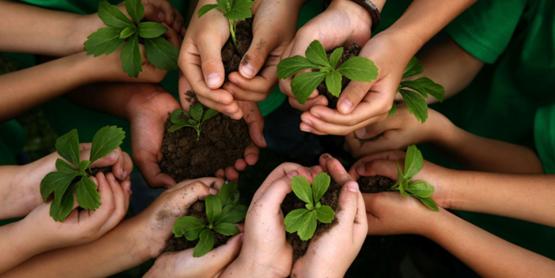 Kids gardening hands
