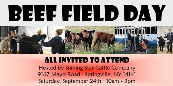 Beef field day