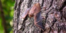 Bat 1695186