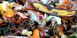 Food waste850x425