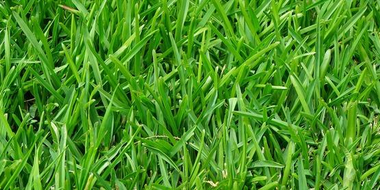 Grass 375586 1280