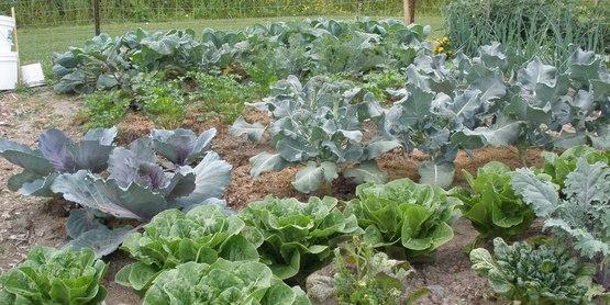 Schuyler gardening20