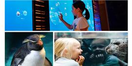 New england aquarium flyer