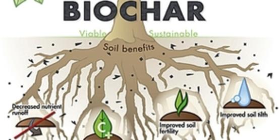 Biochar tree diagram ps