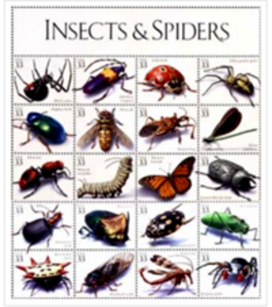 U.S. postage stamps of spiders and insects, used on the Cornell Insect Diagnostic Lab website; 200px wide to use as an image for a sidebar link to their site at: http://entomology.cornell.edu/IDL