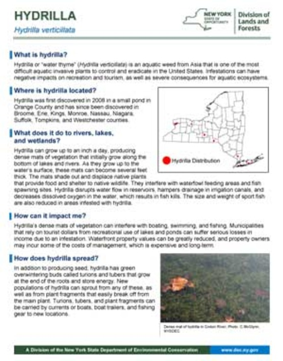 Department of Environmental Conservation hydrilla factsheet