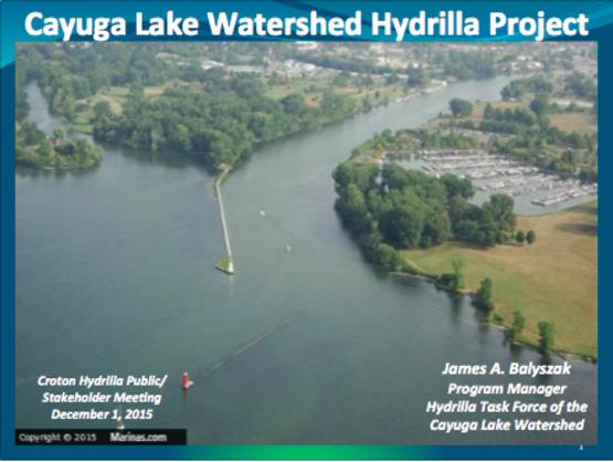 Hydrilla- Cayuga Lake Watershed Hydrilla Project