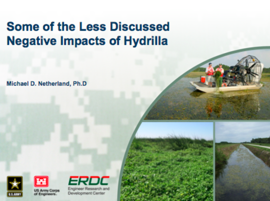 Hydrilla: some of the less discussed negative impacts of hydrilla.  Image from a PowerPoint presentation given at a NYSDEC-organized meeting on  Dec. 2015.  Used by permission of Michael Netherland
