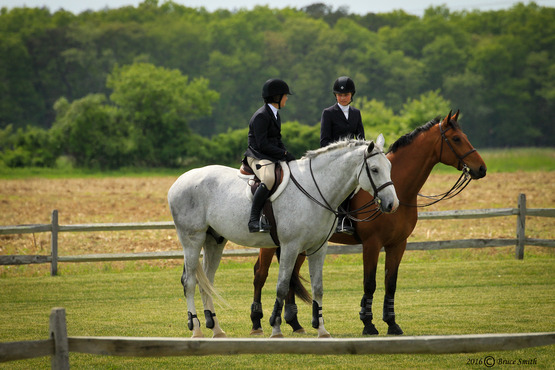 Two horses with riders dressed in English riding gear