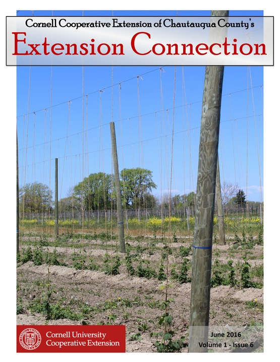 Extension Connection June 2016