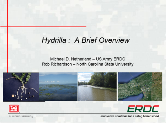 thumbnail for Hydrilla Overview PowerPoint for Croton-on-Hudson program. Slideshow by Mick Netherland