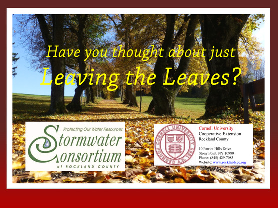 Leave the leaves PSA video