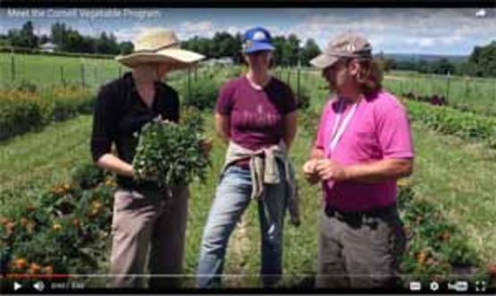 screenshot of Cornell Vegetable Program screen from YouTube