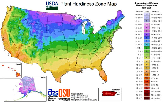 Visit the USDA Plant Hardiness Zone Map