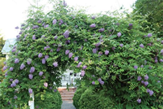 Preparación de camas - Jardinería con plantas perennes - Extensión de la Universidad de Illinois