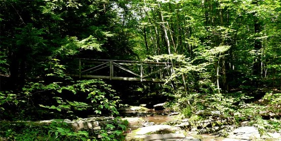woods and stream with walking bridge, from CCE-CG Facebook page