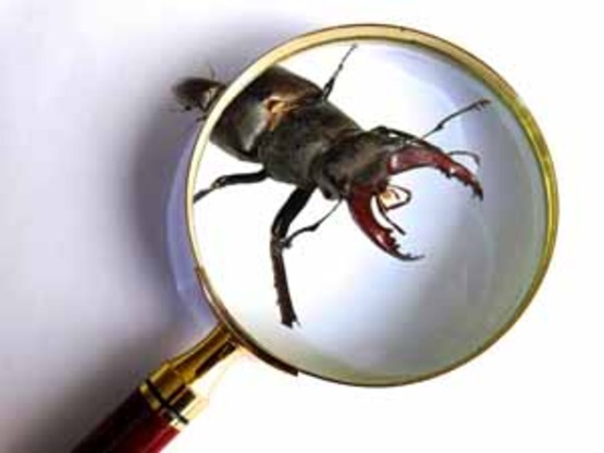 graphic for insect identification; insect and magnifying glass
