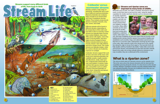 Stream Life article from NYSDEC Conservationist for Kids