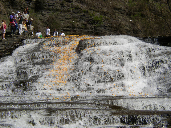 Rubber ducks going over Cascadilla Falls in the 4-H Duck Race, 2008.